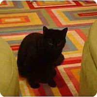 Adopt A Pet :: Cheyenne-PETSMART - Muncie, IN
