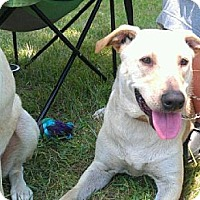 Adopt A Pet :: Sasha - Kingwood, TX