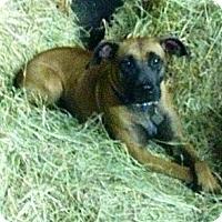 Adopt A Pet :: Scarlet - Kingwood, TX