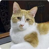 Adopt A Pet :: OLIVER - Bonita Springs, FL