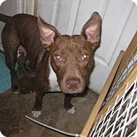 Adopt A Pet :: Jitter Bug - San Antonio, TX