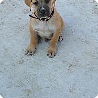 Adopt A Pet :: Baby Hercules - Marlton, NJ