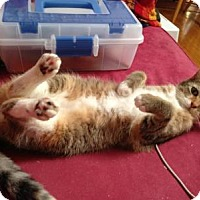 Adopt A Pet :: Gaia - East Smithfield, PA