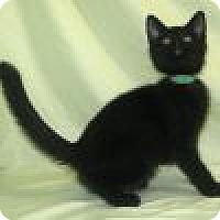 Adopt A Pet :: Karina - Powell, OH