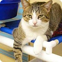 Adopt A Pet :: SEYMOUR - West Palm Beach, FL