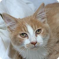 Adopt A Pet :: Mask M - Sacramento, CA
