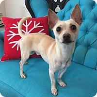 Adopt A Pet :: Dobby - I'm an Adoption Center Dog - Chicago, IL