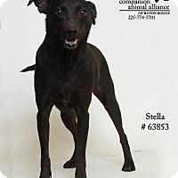 Adopt A Pet :: Stella (Foster) - Baton Rouge, LA