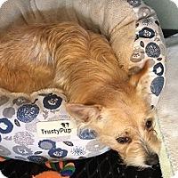 Adopt A Pet :: Sassy - Irmo, SC