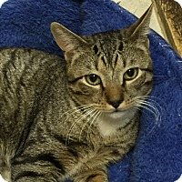 Adopt A Pet :: Lawrence - Medford, MA