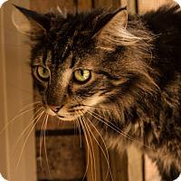 Adopt A Pet :: Winston - Daleville, AL