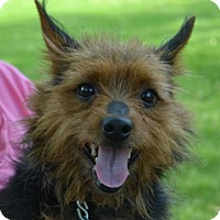 Adopt A Pet :: Ricky Roo - Clarkston, MI