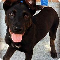 Adopt A Pet :: DEANGELO (video) - Los Angeles, CA