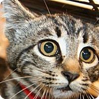 Adopt A Pet :: Trudy - Wildomar, CA