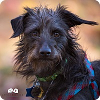 Adopt A Pet :: Malcolm:Adoption Pending - Verona, NJ