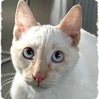 Adopt A Pet :: 7 - Pueblo West, CO