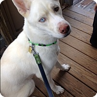 Adopt A Pet :: Sam - Plainfield, IL