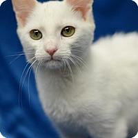 Adopt A Pet :: Stay Puff161724 - Atlanta, GA