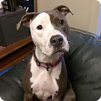 Adopt A Pet :: Patty - Cincinnati, OH