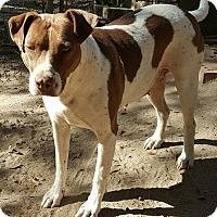 Adopt A Pet :: Sis - Allentown, NJ