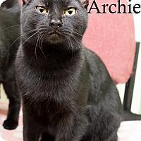 Adopt A Pet :: Archie - Shelton, WA
