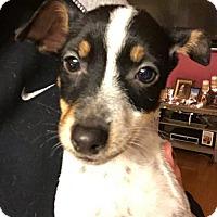 Adopt A Pet :: Jojo - Round Lake Beach, IL