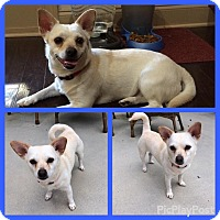 Adopt A Pet :: Sally - Newnan, GA