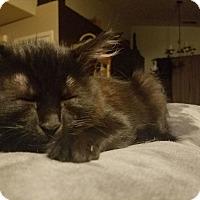 Adopt A Pet :: Kai - Modesto, CA