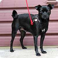 Adopt A Pet :: Duchess - Los Angeles, CA