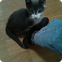 Adopt A Pet :: Mickey - Islip, NY