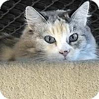 Adopt A Pet :: Marney - Phoenix, AZ