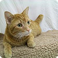 Adopt A Pet :: Kyle (dog-like talker) - Arlington, VA