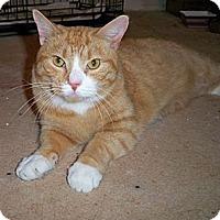 Adopt A Pet :: Blonde - bloomfield, NJ