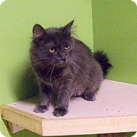 Adopt A Pet :: Skylar - Dover, OH