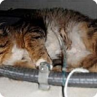 Adopt A Pet :: Pumpkin - Duncan, BC
