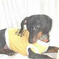 Adopt A Pet :: Fritz - Mooy, AL