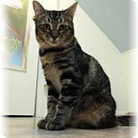 Adopt A Pet :: Lelee - Shelton, WA