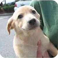 Adopt A Pet :: Katrina - Cumming, GA