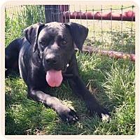 Adopt A Pet :: Buster - Louisville, KY