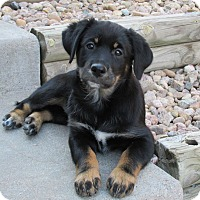 Adopt A Pet :: Sassy - Greeley, CO