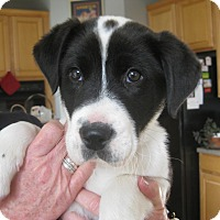 Adopt A Pet :: Ricky - ADOPTION PENDING - Portland, ME