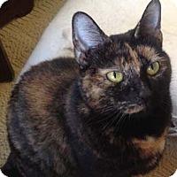 Adopt A Pet :: Peony - Merrifield, VA