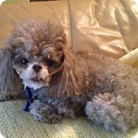 Adopt A Pet :: MACIE - Melbourne, FL