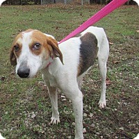 Adopt A Pet :: Diesel - Midlothian, VA