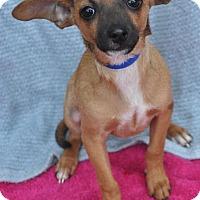 Adopt A Pet :: Braden - Atlanta, GA