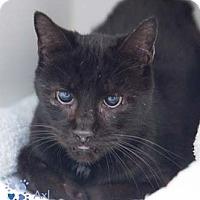 Adopt A Pet :: Axl - Merrifield, VA