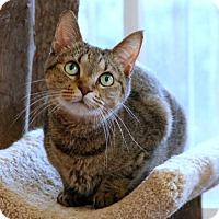 Adopt A Pet :: Kinsey - Gaithersburg, MD