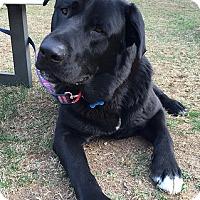 Adopt A Pet :: Nitro - Midlothian, VA