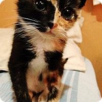 Adopt A Pet :: Aloisa - Staten Island, NY