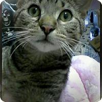 Adopt A Pet :: Hamilton - Trevose, PA